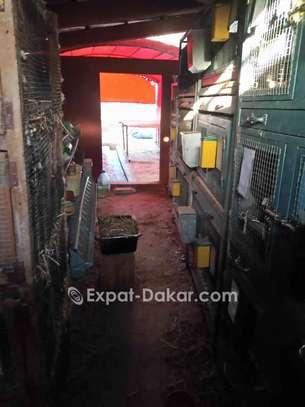 Vente Lapins et Cages image 2