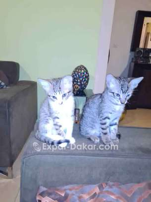 Chatons adorables image 1