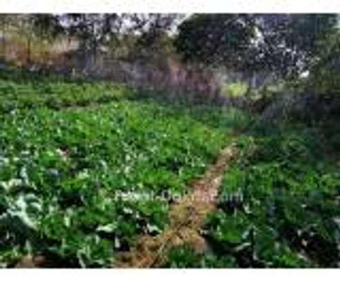 Systéme d'irrigation moderne image 2
