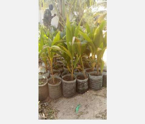 ABRES FRUITIERS image 1