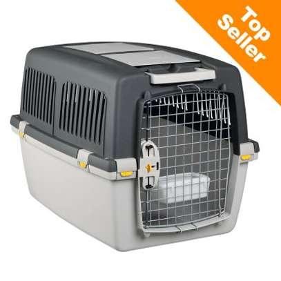 Recherche caisse transport chien aux normes IATA image 1