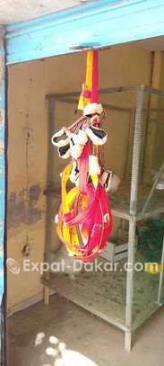 Mbengue éleveurs image 2