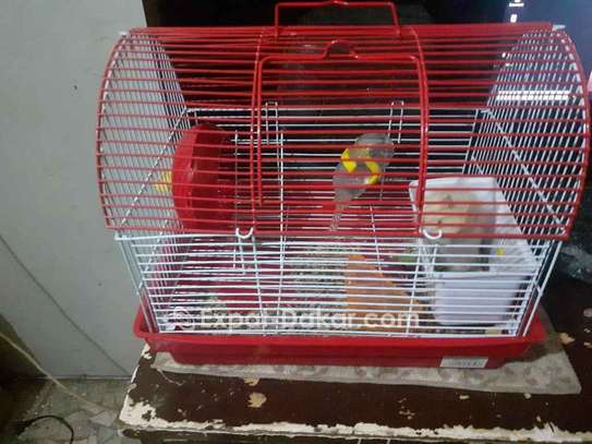 Hamster à vendre image 1