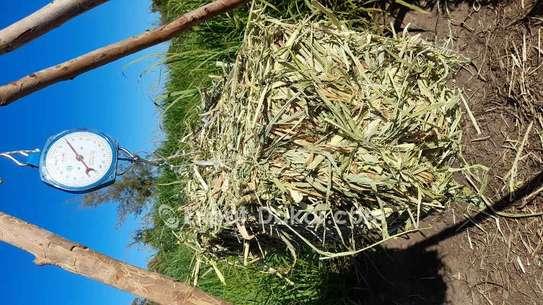 Bottes de foin de Maralfalfa image 2