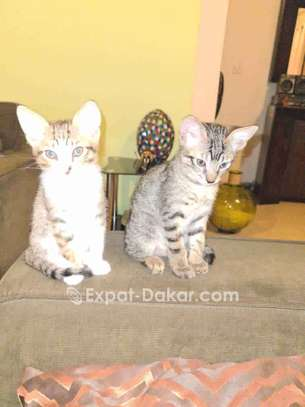 Chatons adorables image 2