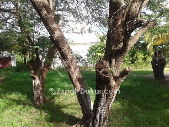 Belle maison en pleine nature à Mboro Thies image 3