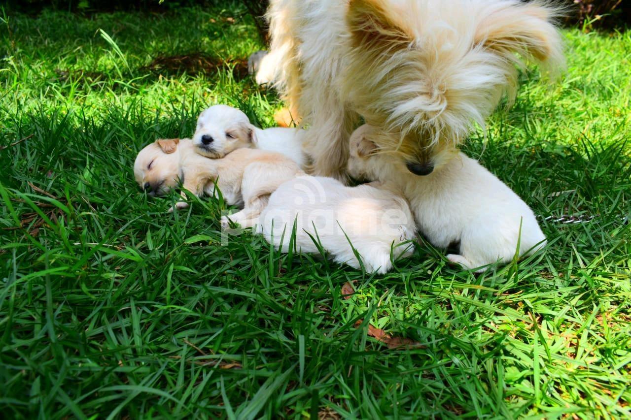 Puppy in Nairobi   PigiaMe