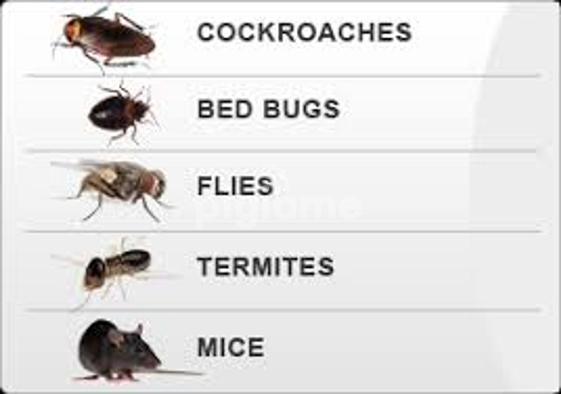 Bestcare Bed Bug Fumigation And Pest Control Services In Nairobi Pigiame