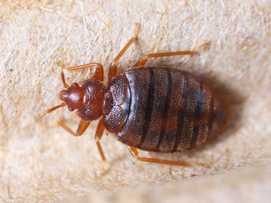 Trusted & Vetted Bed Bug Removal Professionals.Call Now image 7