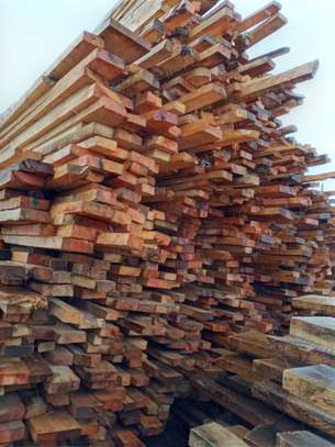 SELLING  OF TIMBER image 1