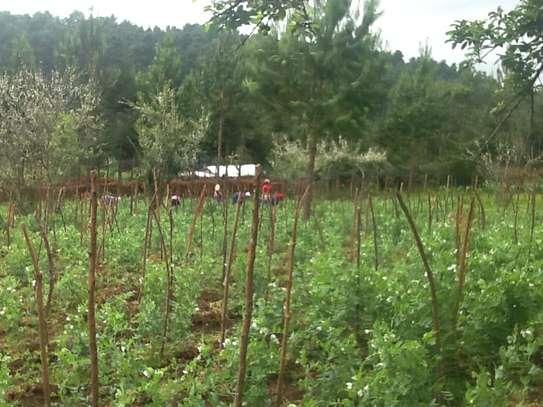 Prime land in North Kinangop. image 4