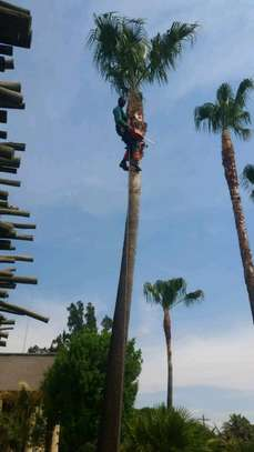 Hire Dangerous Tree Removal Service,Stump Removal,Tree Cutting & Tree Pruning Experts.Get A Free Quote Now