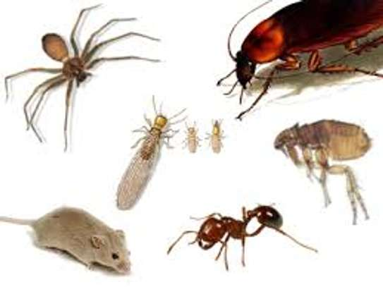 Pest Control and Fumigation Services image 1
