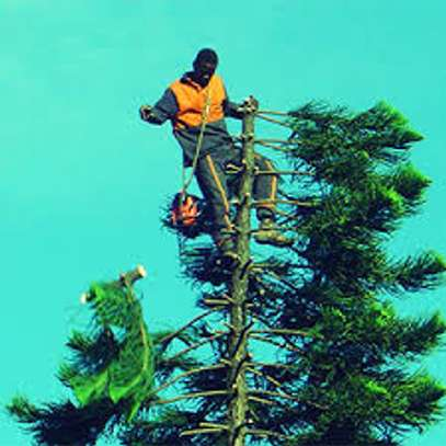 Tree cutting & Site Clearance -Free Quotes image 2