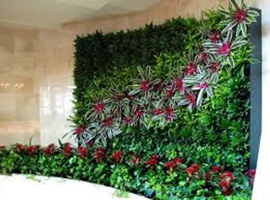 Office Plant Maintenance.Regular watering, light pruning, and fertilizing. image 4