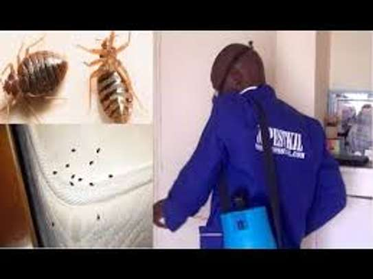 100% Rodent, Cockroach, Bed Bugs & Pests control