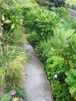 Best Gardening & Lawn Mowing Services|Contact Us Today. image 10