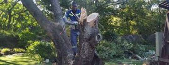 QUICK AFFORDABLE TREE FELLING AND LANDSCAPING SERVICES image 6