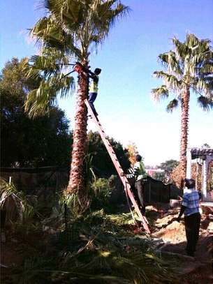 Tree Cutting, Trimming, Clearing image 5
