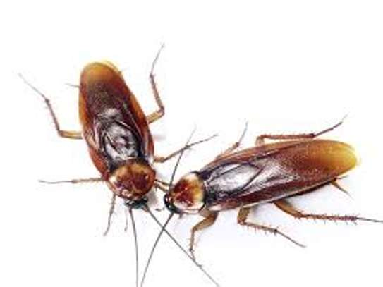 Fumigation and Pest Control Services For / Of Bedbugs, Cockroaches, Rats, Termites, Bees, Bats, Snakes, Mosquitoes image 1