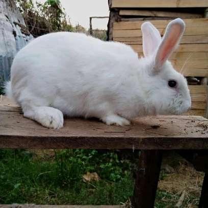 Rabbits image 2