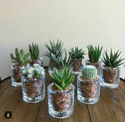 Artificial or Living Glass Succulents