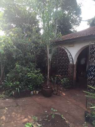 Majestic Palms for Indoor and outdoor decoration, snake plants, in Nairobi image 1