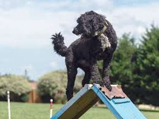 Mobile Dog Grooming - We Come To You.Call Us Today! image 9
