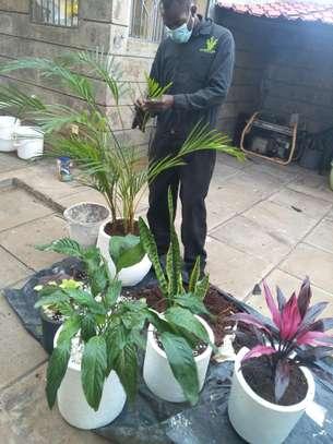 Garden Maintenance Services image 8