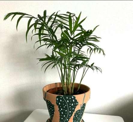Pimped pot plants image 11