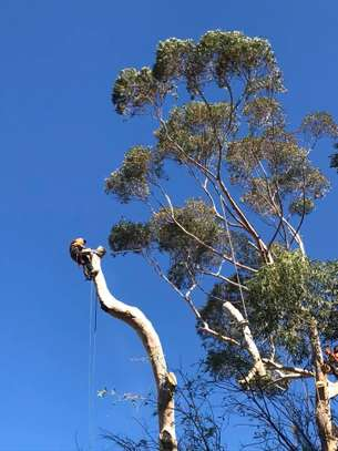 24 HR Emergency Tree cutting/Tree Removal/Tree Pruning/ Fast & affordable image 8