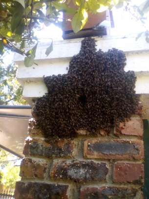 Are you experiencing a Bee Infestation? We can help you! image 2