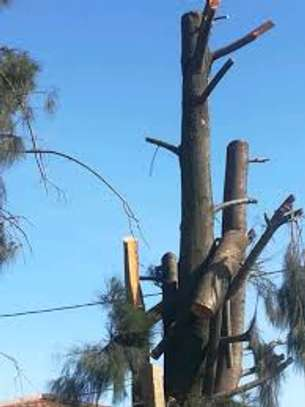 QUICK AFFORDABLE TREE FELLING AND LANDSCAPING SERVICES image 1
