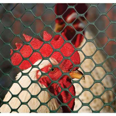 Plastic Poultry Mesh image 1