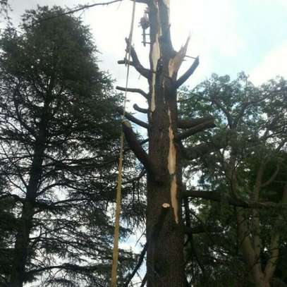 Tree Felling Services, Palm Tree Cleaning and Stump Removals image 3