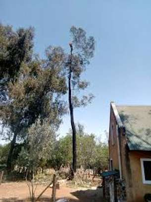 QUICK AFFORDABLE TREE FELLING AND LANDSCAPING SERVICES image 12