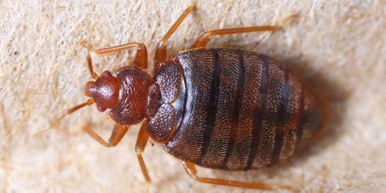 Trusted & Vetted Bed Bug Removal Professionals.Call Now image 3