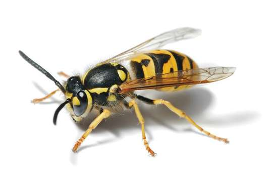 Best Fumigation & Pest Control Services Company Nairobi | Call in our experts today. We Are 24/7 image 10