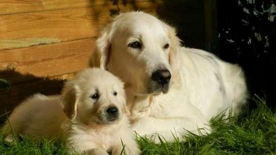 Karimz Pet Shop image 20