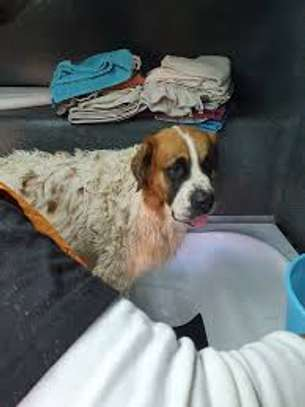 We offer safe, comfortable mobile pet grooming services image 2