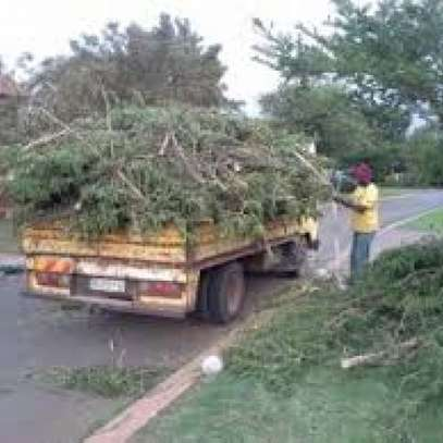 Professional Tree Cutting/Tree Experts  Tree Removal, Tree Trimming. image 2