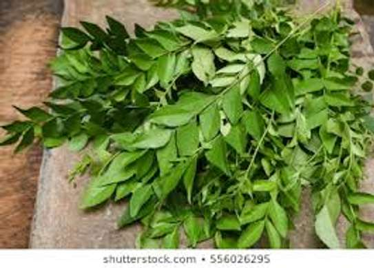 Murraya Koenigii (limri) leaves to help with weight loss and diabetes image 1