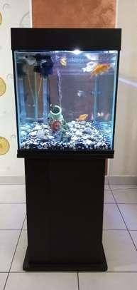 Aquarium image 2