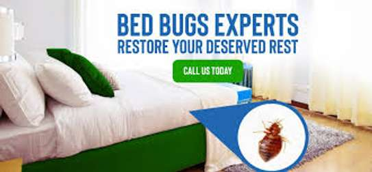 Bed bugs Control Services image 2