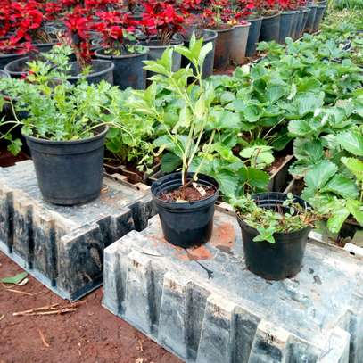 Planters image 1
