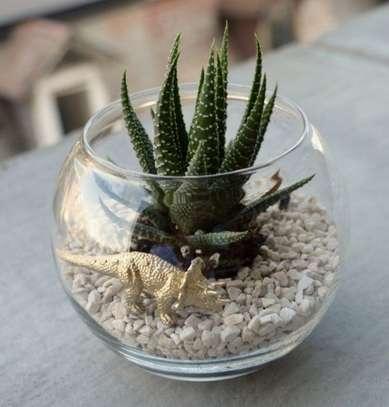 Décor live Succulent image 1