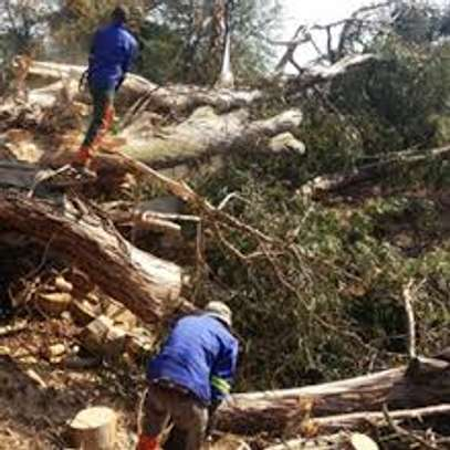 Tree Felling, Pruning, Site Clearance and Firewood Sales