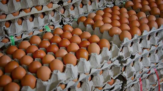 Eggs 320/- per tray (Layers)