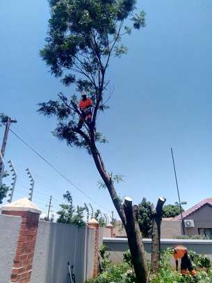 Bestcare Tree Services – Tree felling & Tree Cutting Company image 4