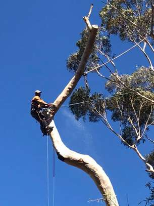 24 HR Emergency Tree cutting/Tree Removal/Tree Pruning/ Fast & affordable image 12
